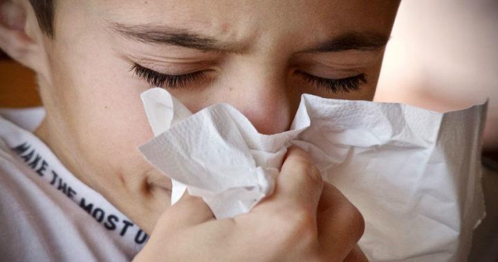 Alergia a los ácaros: creencias falsas que debes conocer
