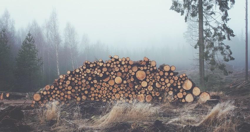 Frenar la pérdida de la biodiversidad